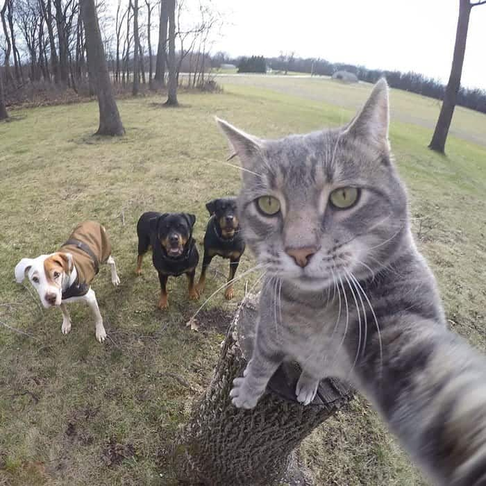 manny-cat-takes-selfies-pack