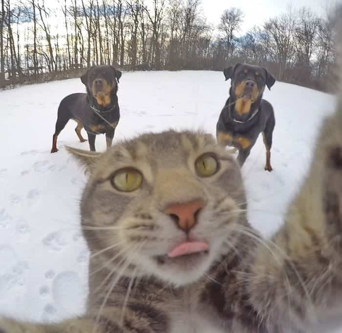 manny-cat-takes-selfies-reach