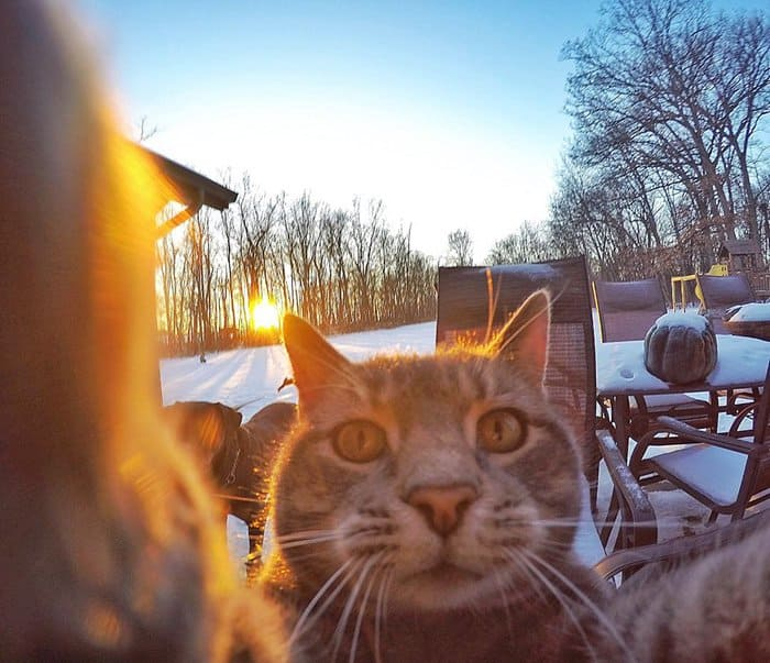 manny-cat-takes-selfies-snow