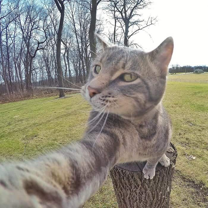 manny-cat-takes-selfies-stump