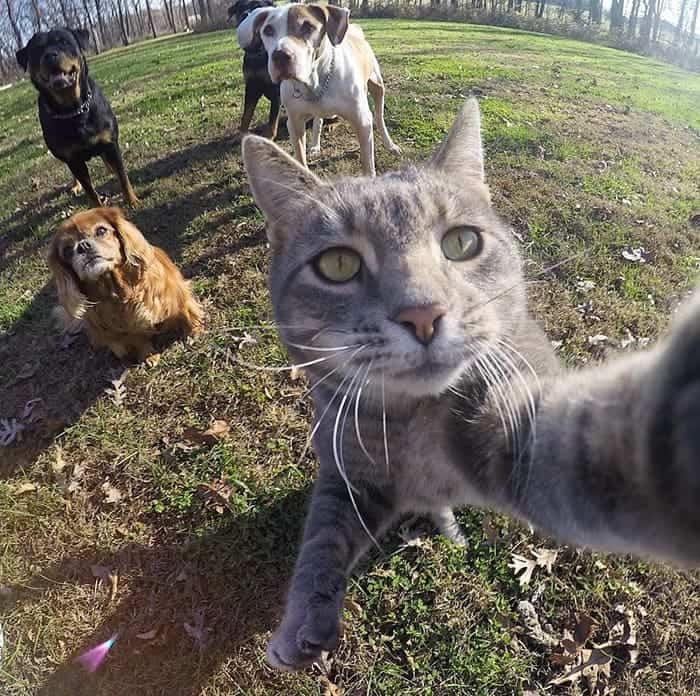 manny-cat-takes-selfies-top