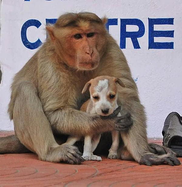 monkey-dog-friends