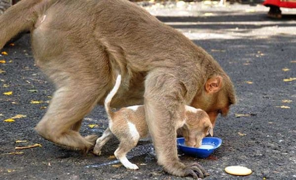 monkey-feed