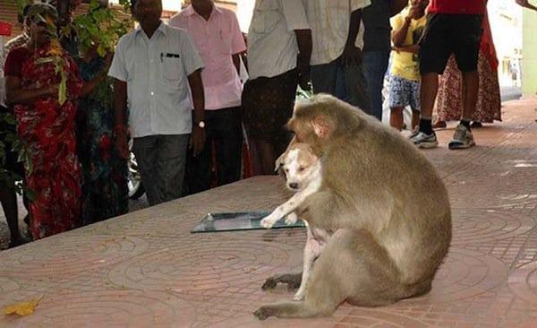 monkey-locals