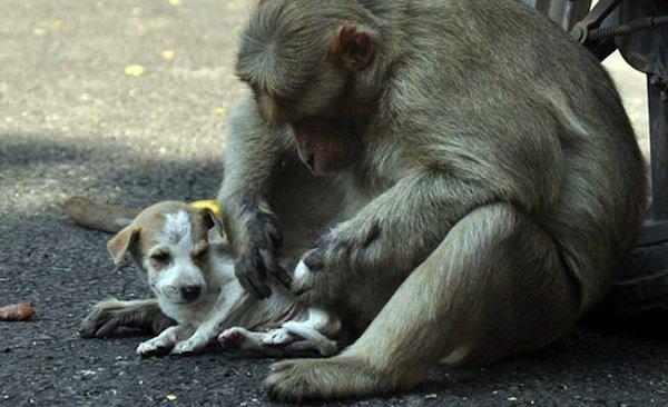 monkey-puppy-love