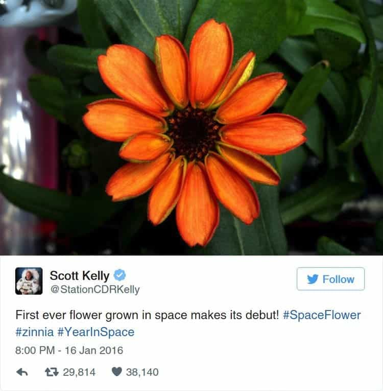 nasa-space-flower
