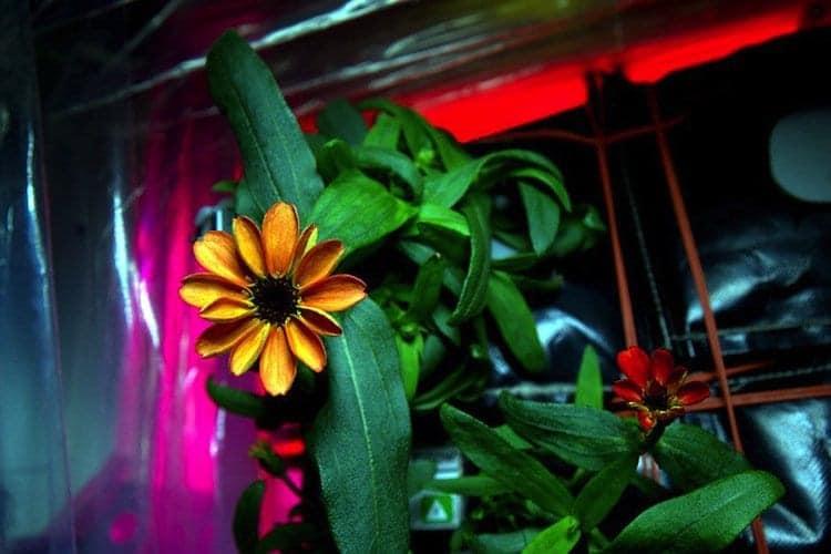 nasa-space-plant