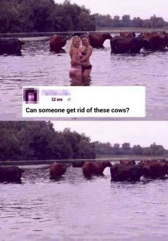photoshop-requests-funny-results-cows