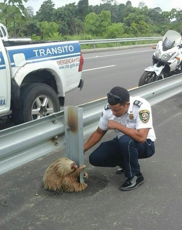police-rescue-sloth-cross-highway-ecuador-floor