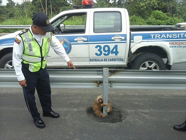 police-rescue-sloth-cross-highway-ecuador-top