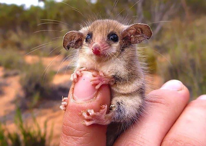possum-first
