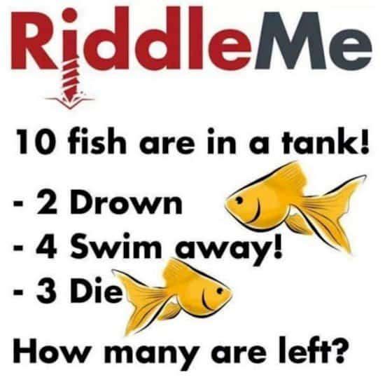 riddle me fish