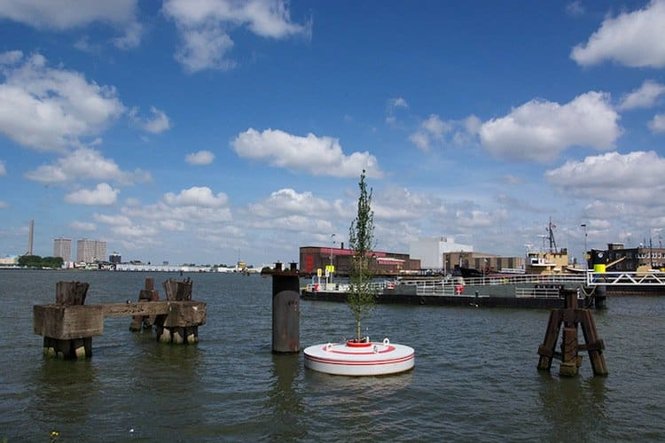 rotterdam-floating-tree