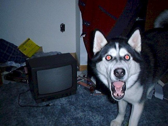 shocked dog tv