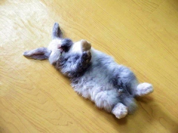 sleep-bunny