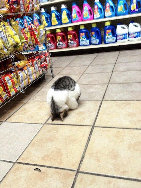 sleep-cat-store
