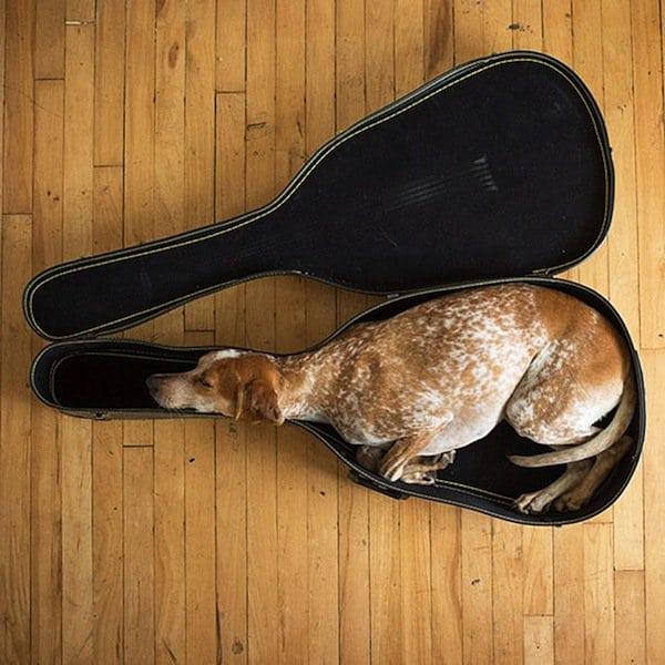 sleep-dog-guitar-case