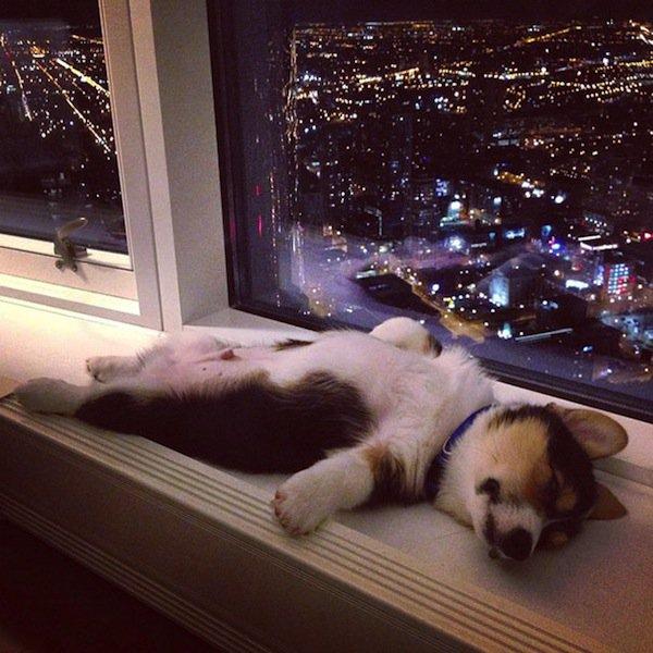 sleep-dog-window-ledge