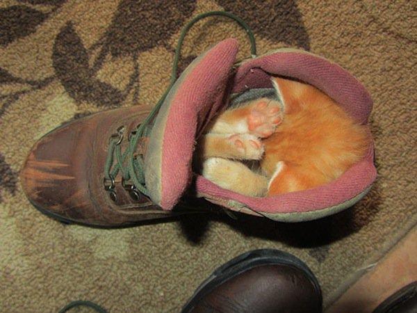 sleep-kitten-boot