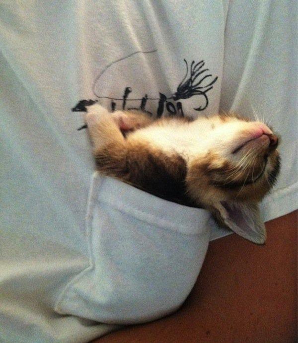 sleep-kitten-pocket