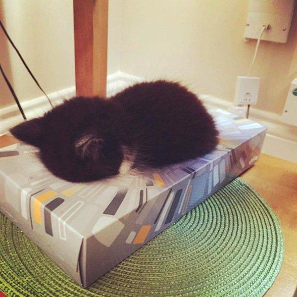 sleep-kitten-tissue