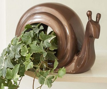 snail bird feeder plant