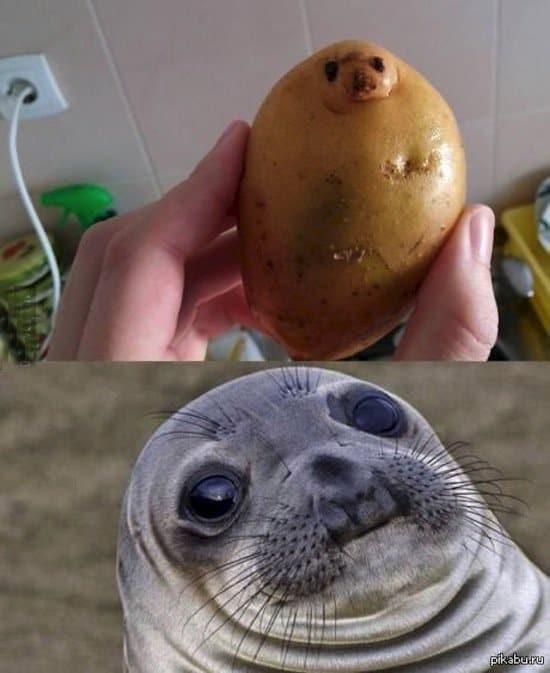 things-potato
