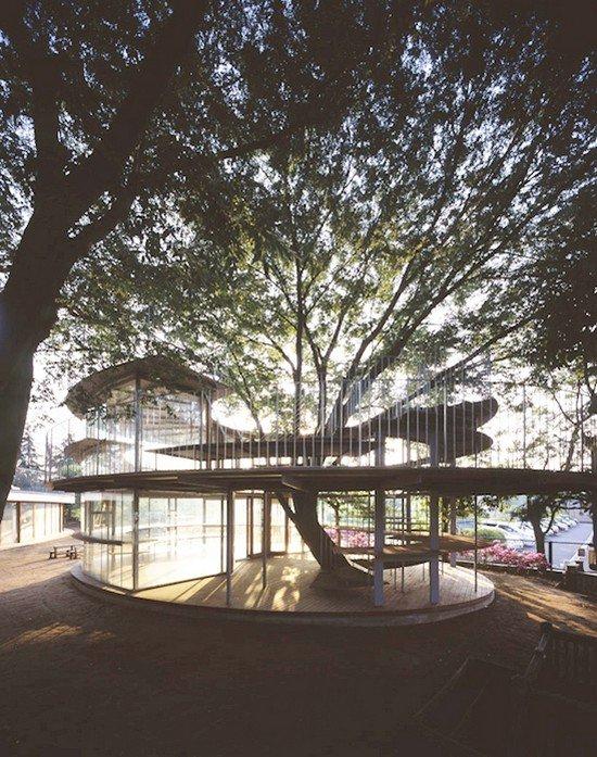 tree ring tokyo