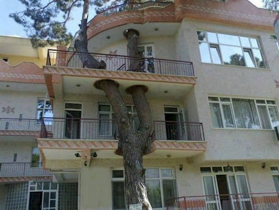 turkish tree house