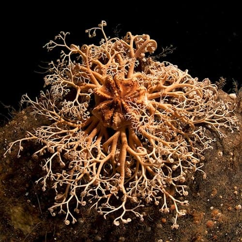 weird-creatures-basket-star