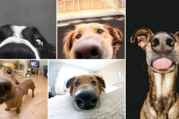 Adorable Nosy Dogs