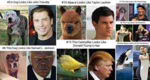 Animals Look Like Famous People