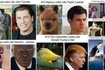 Animals Look Like Famous People