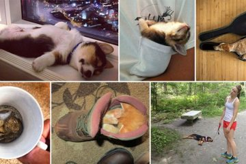 Animals Sleeping Funniest Positions Places