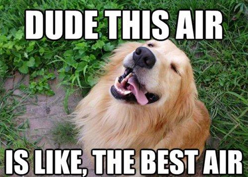 Best Air