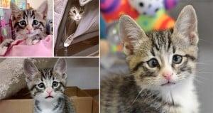 'Bum' Kitten Worried Eyes