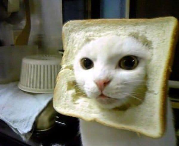 Cat In Bread