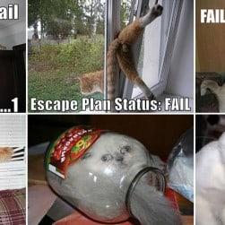 Cats Regret Decisions Fails