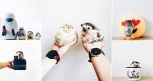 Cute Pet Hedgehogs