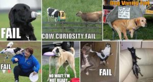 FUNNY AND RANDOM ANIMAL FAILS