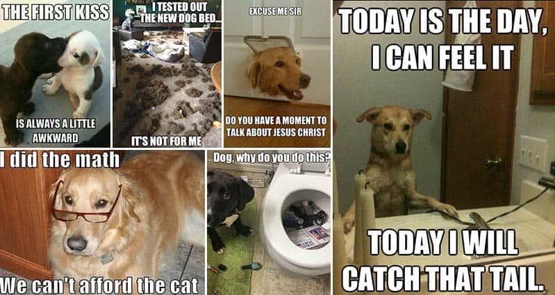 Dogs Vs Cat Meme