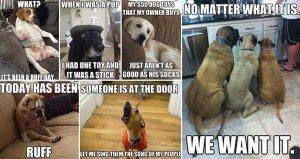 Hilarious Adorable Dog Memes