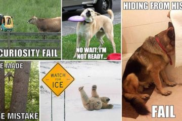 Hilarious Animal Fails
