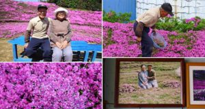 Husband Plants Scented Flowers Blind Wife