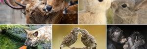 Images Animals Sharing A Kiss