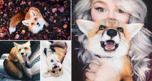 Juniper Cutest Pet Fox