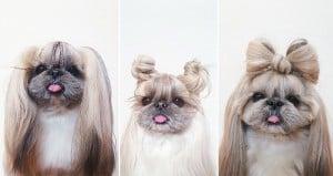 'Kuma' Hairstyle Instagram