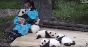 Love Pandas Perfect Job