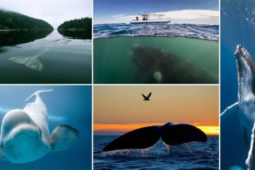 Magnificent Images Whales