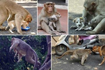 Monkey Adopts Puppy India